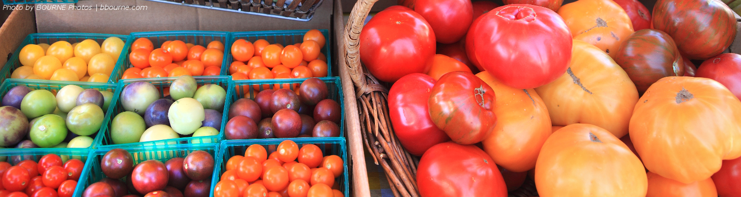 small tomatoes in little green baskets and large tomatoes in a big wicker basket sit on table.